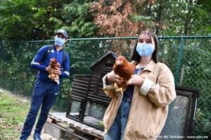 Levée du confinement pour les volailles et oiseaux, chez les particuliers