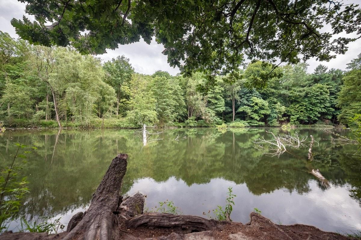 Bois de Lauzelle - zone humide
