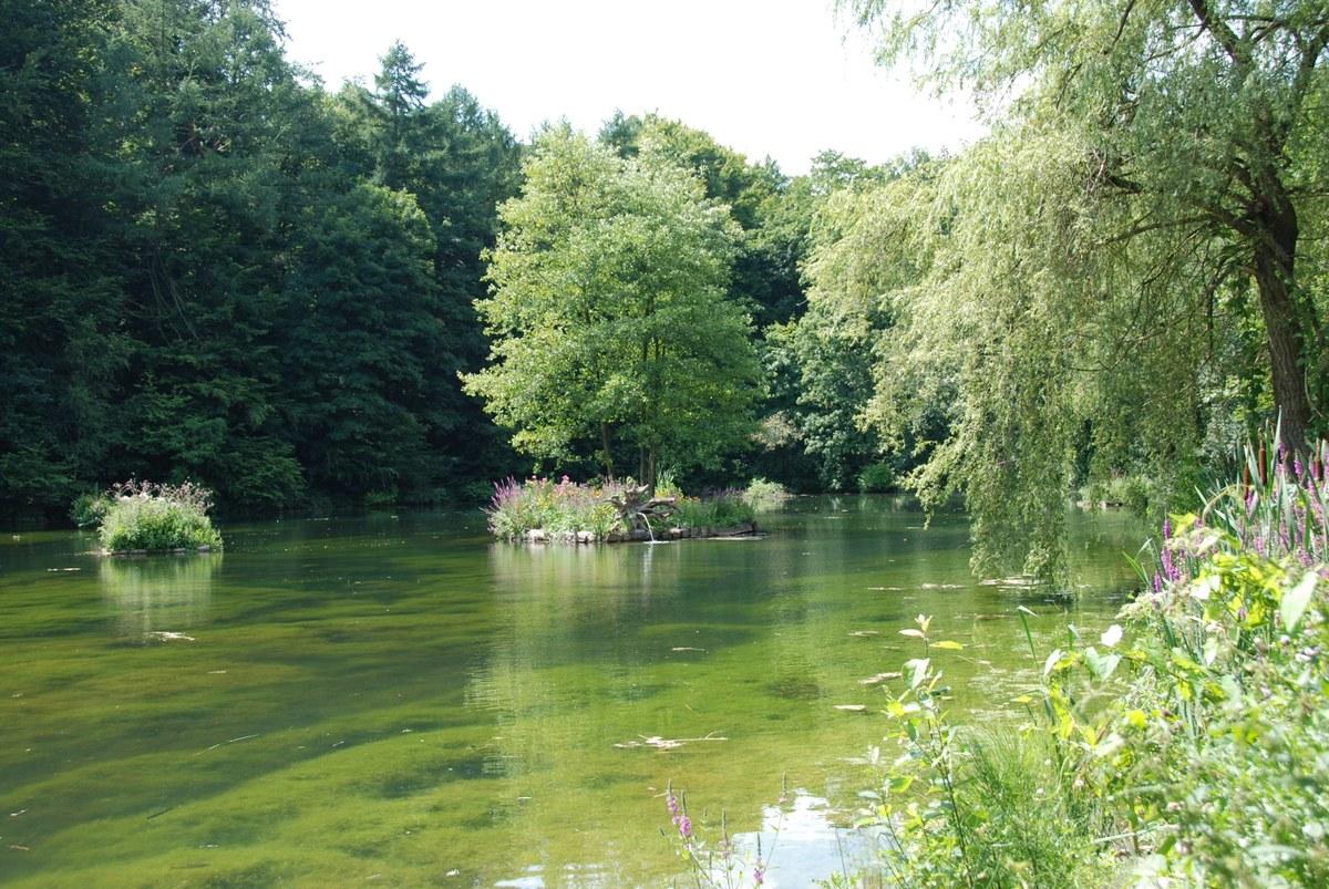 Bois de Lauzelle MCD 1