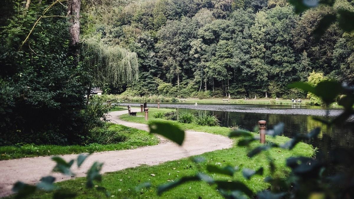 Bois des Rêves - Benjamin Zwarts